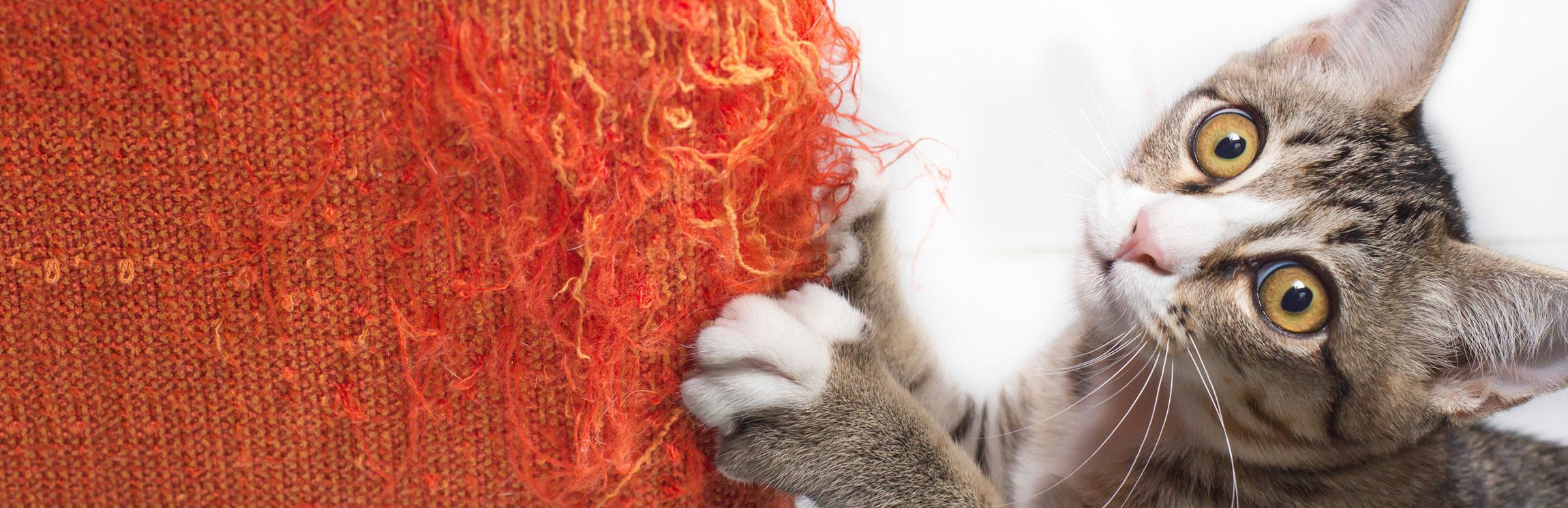 Madame Moustache, comportementaliste chat, relation humain-chat, garantir le bien-être de votre chat, cohabitation entre chats, adoption d'un chat, améliorer l'environnement de votre chat, accompagner votre chat qui vieillit, consultation à domicile, Lausanne, Canton de Vaud, Suisse